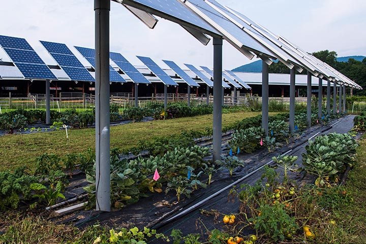 Photo of solar panels with green grass and vegetables growing underneath.